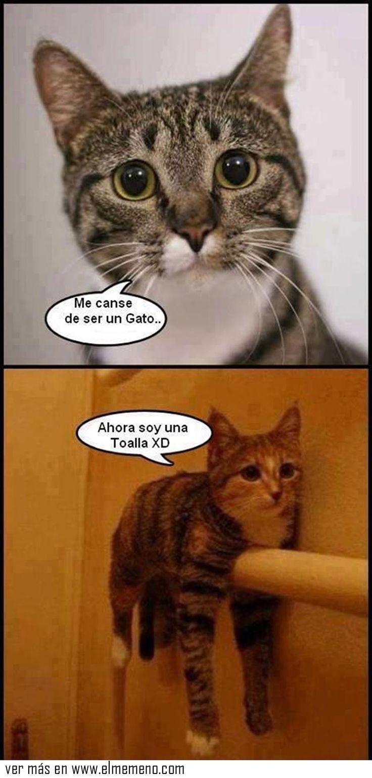 0dd6c8f69320dfb0ed0460fe9f1464f6 el meme chistes humor 232 best funny images on pinterest cats, castiel and funny pets,Cat Negro Meme