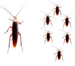 Como desaparecer plaga de cucarachas de tu casa - Taringa!