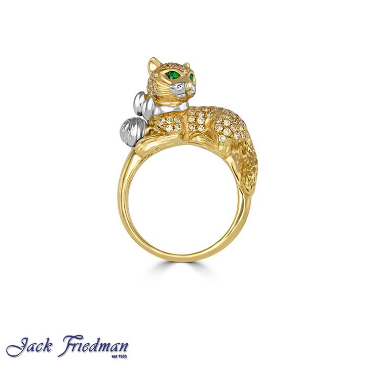Purrrrfect! jackfriedman.co.za