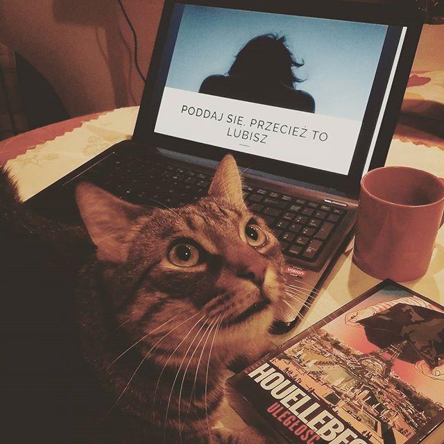 Judasz i #Houellebecq. Nie mogą się rozstać. To ja przy okazji przypomnę, że #Uległość pojawiła się w ostatnim wpisie na neira.pl. #neiraczyta #książki #recenzja #kot