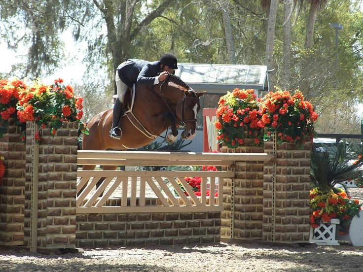 Elite Warmblood Stallions Cabardino Viva Voltaire Futurist Rio Grande W. Charlot Farms Horse Breeders Hunter Jumper Dressage Horses for Sale