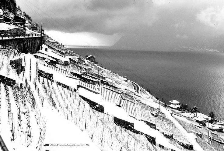 Lavaux UNESCO en hiver / in Winter