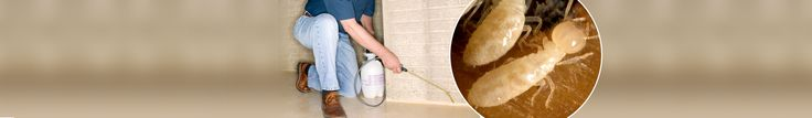 When it comes to controlling pests, the concern of most parents is the risks that hazardous chemicals pose to their children. This is why our technicians use solutions that are non-toxic, non-corrosive, environmental friendly and non-irritating only. Read here for more details : http://www.manta.com/c/mx599lm/pest-control