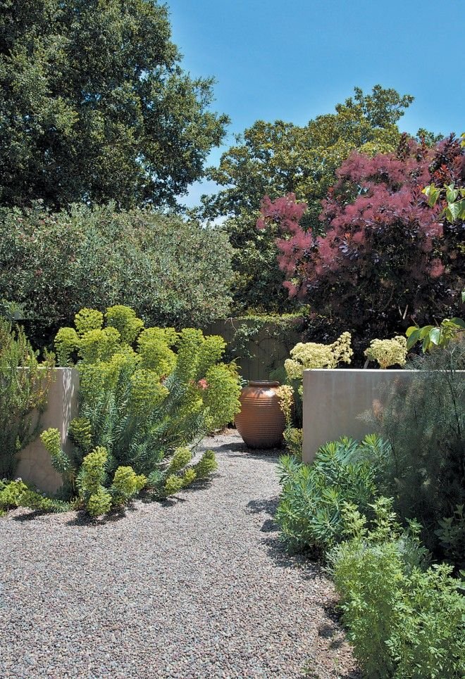 Low walls in the side courtyard frame a bubbling terracotta foun- tain; chartreuse Euphorbia rigida and purple smoke tree (Cotinus coggyria ...