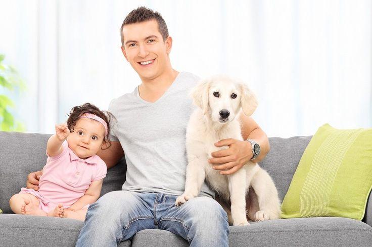 Socialização dos cães é essencial para educar bem o seu pet