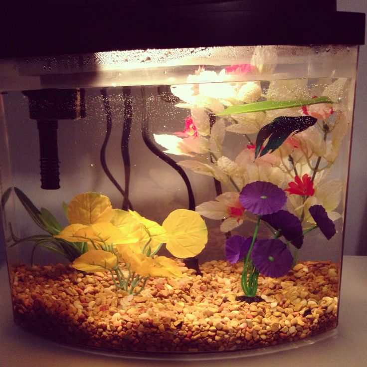 126 best i want a betta images on pinterest fish for Best place to buy betta fish
