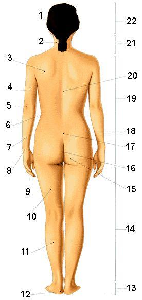 Il corpo della donna :: Vocabolario italiano illustrato :: Impariamo l'italiano