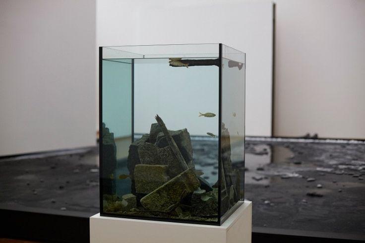 """Pierre Huyghe """"Untitled"""", 2013 (Courtesy Privatsammlung Kanada, Foto: © Ola Rindal, Ausstellungsansicht Museum Ludwig, Köln, 2014)"""