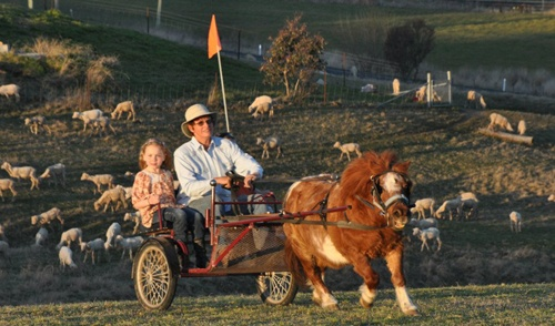 Take a ride at Barcoo's Barn Farmstay, near Bathurst NSW, with Cody pulling the sulky.
