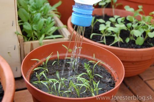 Watering tiny plants
