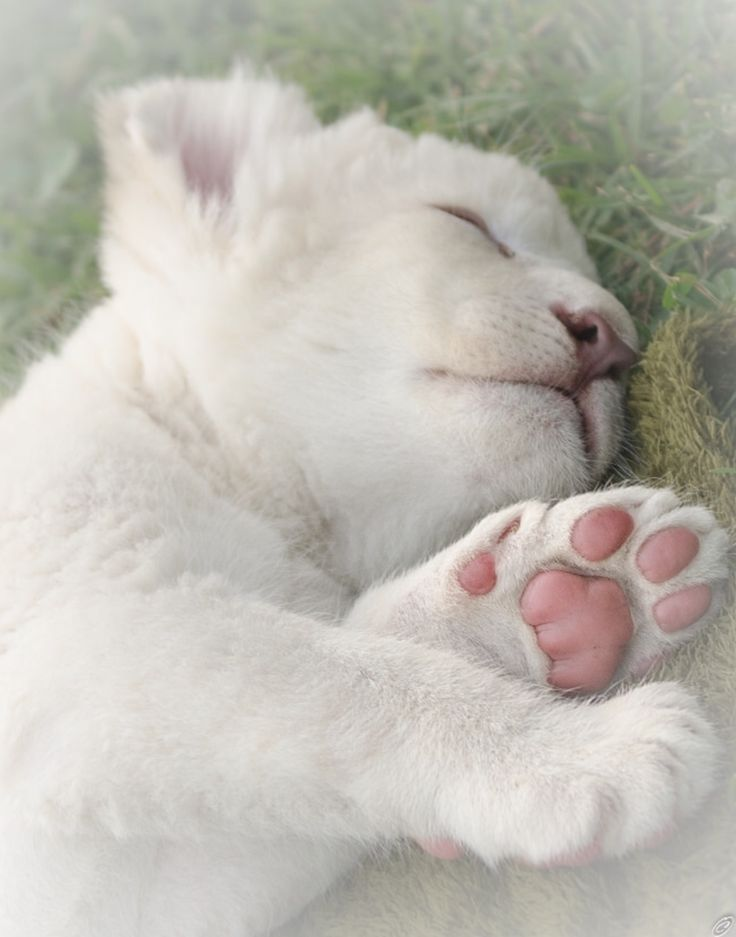 Good sleep and nice dream for you, small lion!