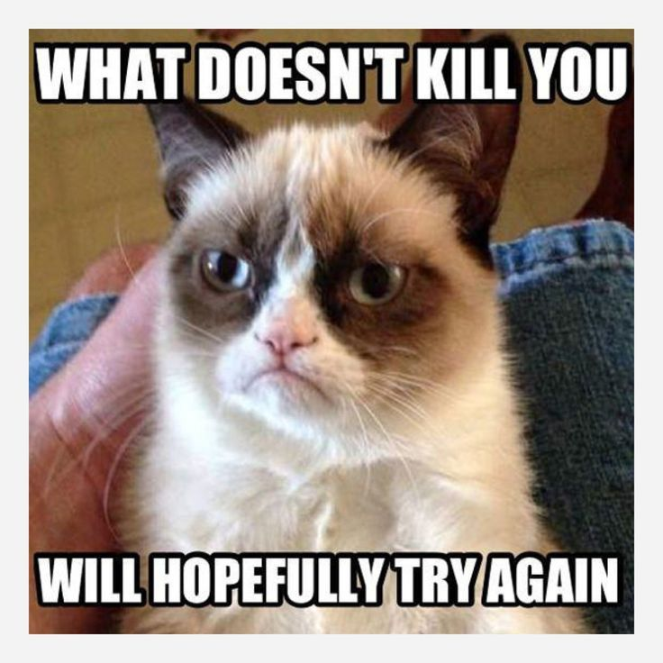 Best Grumpy Cat Images On Pinterest Book Cat Memes And - 17 cats that are angry grumpy and fed up with everything