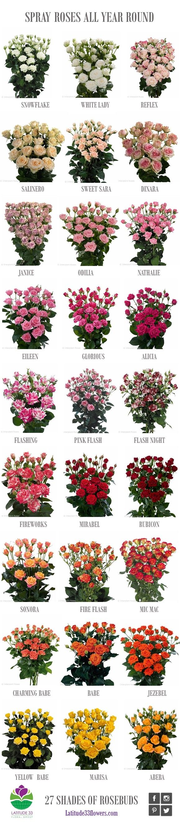 All our spray rose varieties, all year round <3