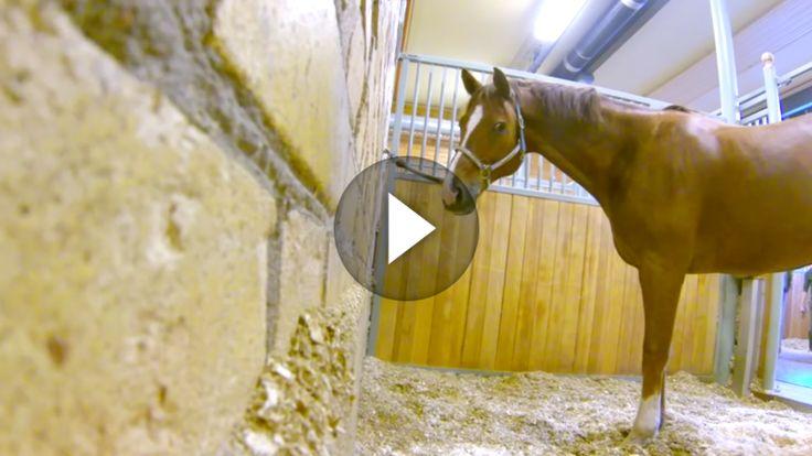 Wer dachte, dass Pferde nicht klug sind, wird hier eines Besseren belehrt! Diesem Pferd wird die Warterei irgendwann zu viel, so dass es beschließt...