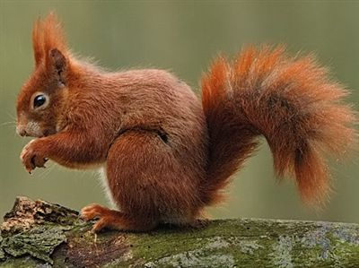 eekhoorn - Google zoeken