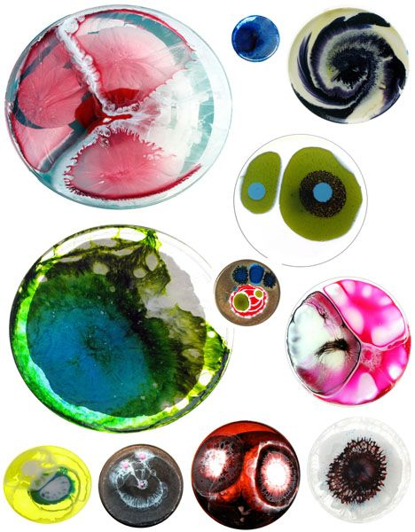 Petri Dish Portraits: Eco-Art That Will Literally Grow On You!   WebEcoist