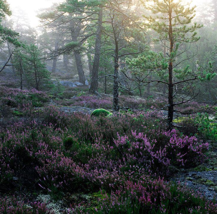 More info: Tyresta National Park - Naturvårdsverket