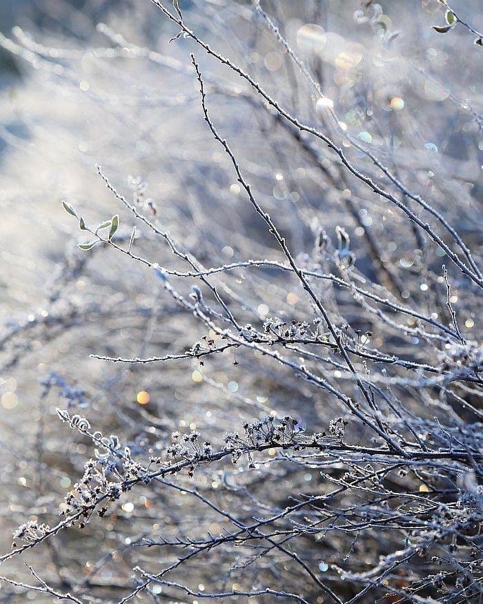 Dobroe Utro Zima Krasota Dobroeutro Winter Beauty