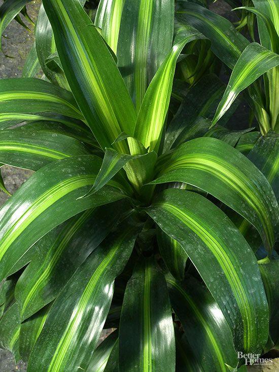 8 Best Plants Indoor Images On Pinterest House Plants 400 x 300