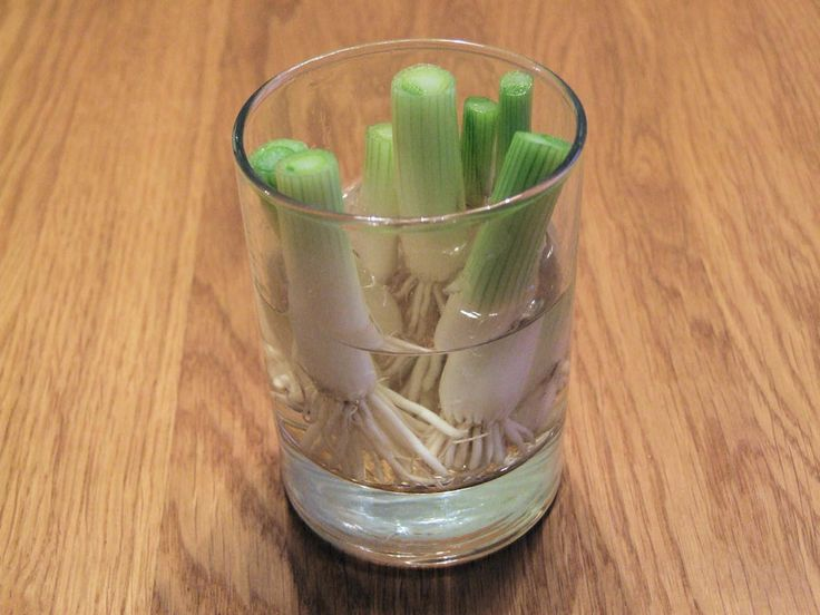 You can regrow scallions by leaving an inch attached to the roots and place them in a small glass with a little water in a well-lit room.
