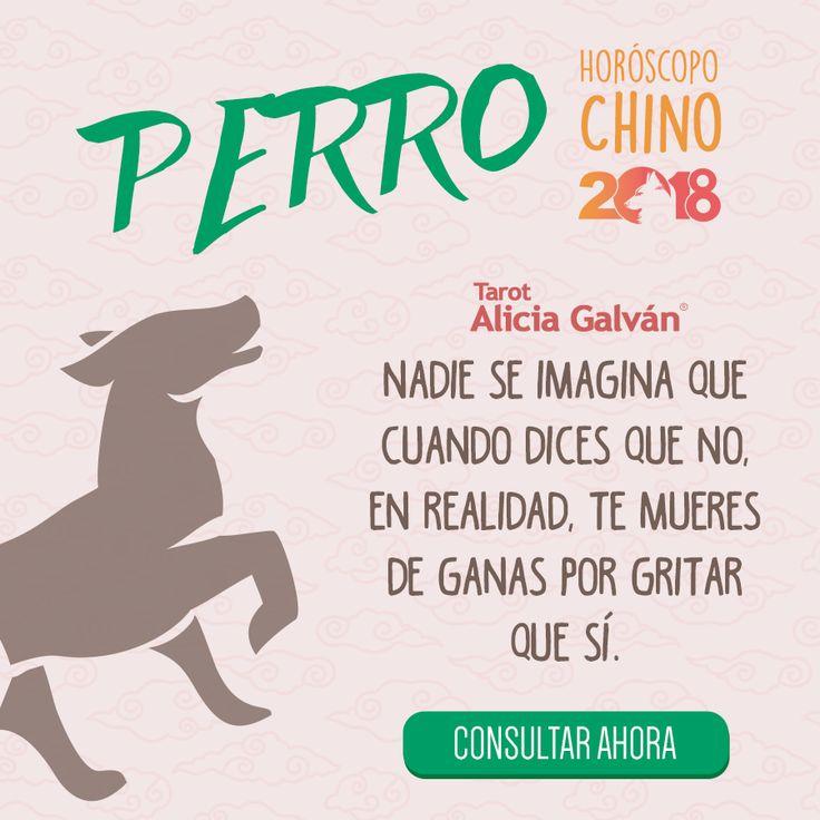 ¿Quieres saber qué te deparará el año nuevo chino? Descúbrelo aqui 👇🐶 #perro  #horóscopochino #añodelperro