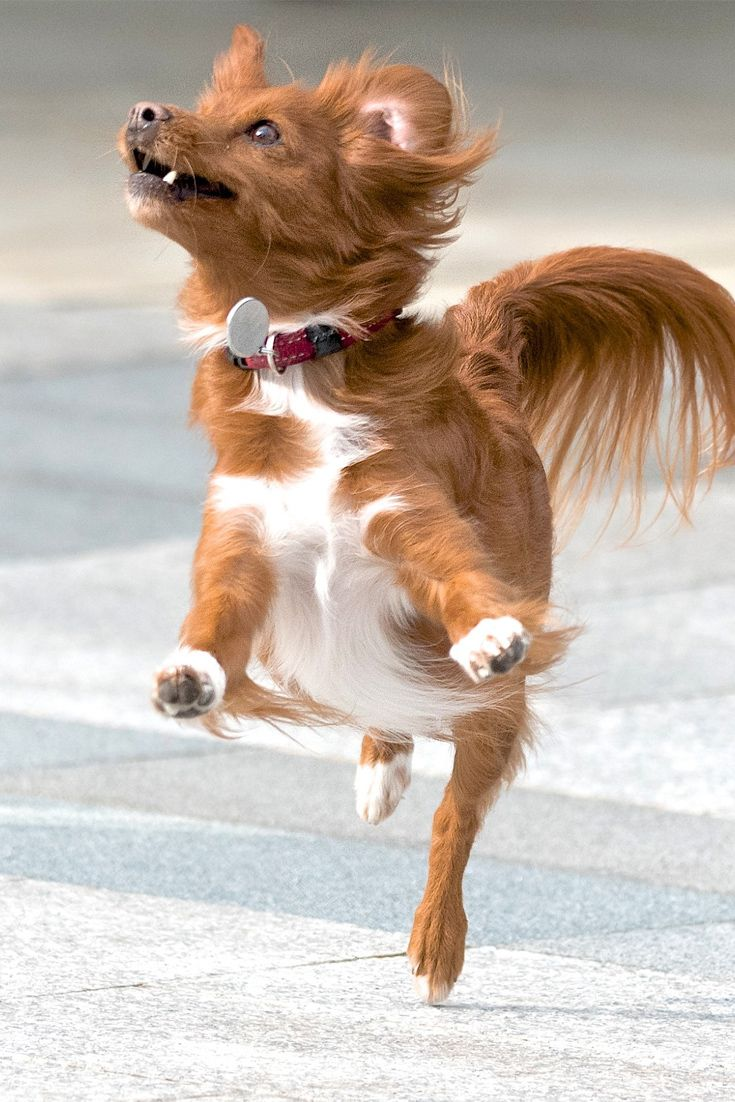 It Feels Like A Funny Cute Dog Is Dancing Cute Dog Funny