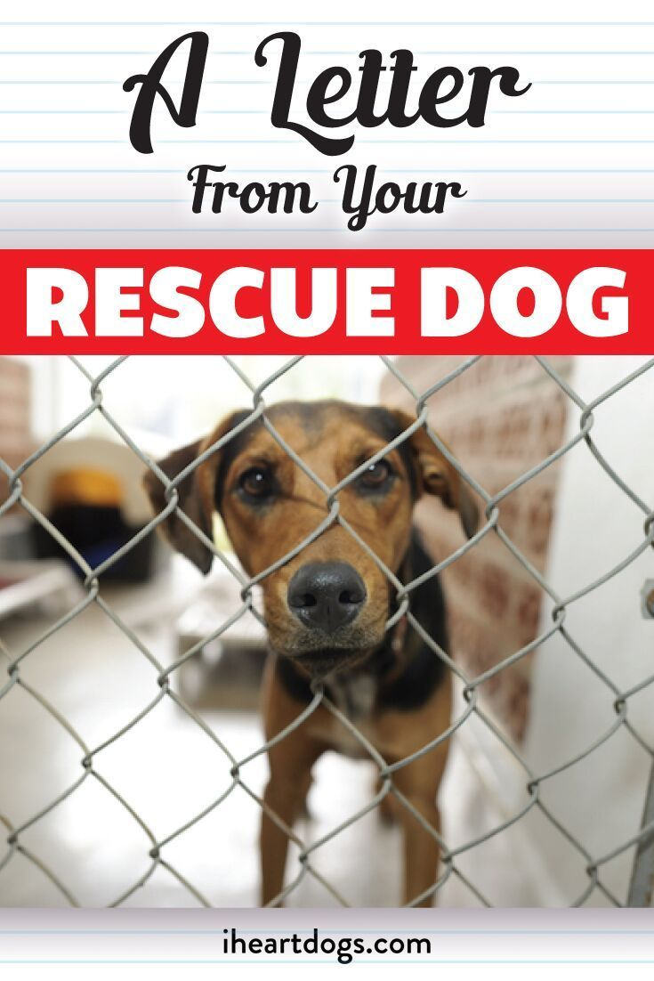 A Letter From Your Rescue Dog Rescue Dog Quotes Rescue Dogs Rescue Dogs Mom