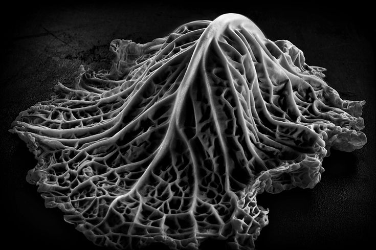 """https://flic.kr/p/9qNgXm 