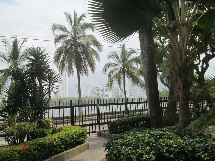 Una gratificante vista parcial del jardín de mi edificio hacia el Laguito.