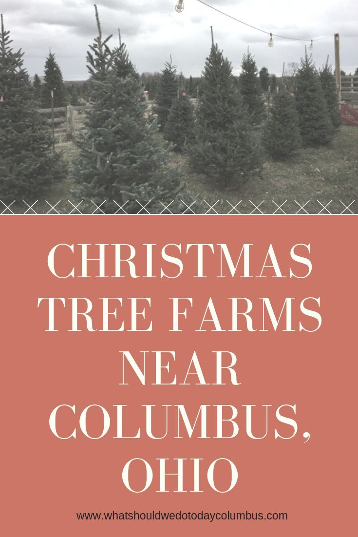 Christmas Tree Farms In Columbus And Beyond Christmas Tree Farm Tree Farms Christmas Farm