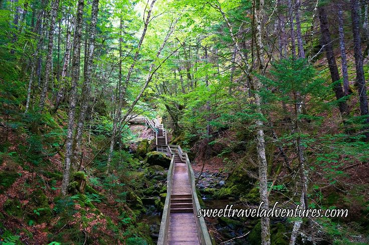 The Dickson Falls Trail Boardwalk Through the Acadian Forest in Fundy National Park near Moncton, New Brunswick, Canada