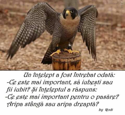 A sage was asked once:- What is it more important? To love or to be loved? So the sage answered: - What is more important for a bird? The left wing or the right one?