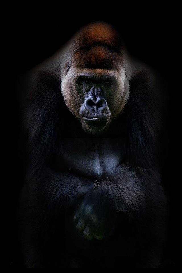 Gorila so awesome!