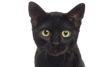 Stop Hating On Black Cats! It's National Black Cat Day! | The Huffington Post