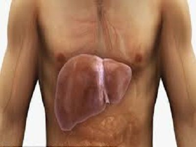 Een vette leverontstaat wanneer overtollig vet zich binnen de levercellen ophoopt. Normaal en gezond weefsel wordt deels vervangen door vet weefsel. Dit vet gaat de lever binnenkomen en infiltreert geleidelijk aan de gezonde delen van de lever. Leververvetting zorgt voor klachten, overgewicht en het onvermogen om af te vallen. Het goede nieuws is dat een…