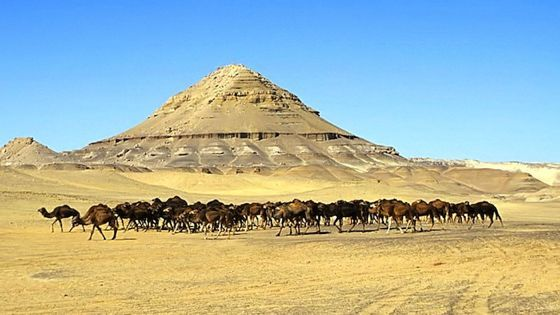 Bahariya Oasis Toursis a good way to see much of the Western Sahara. See a modern archaeological dig, travel to natural wonders and enjoy the many other pleasures of the Bahariya Oasis in Sahara.