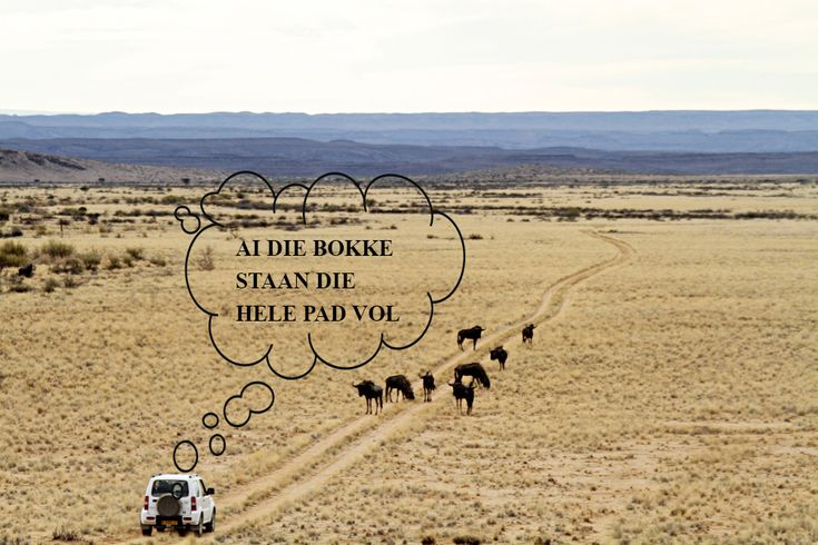 Learn how to speak the local language in Namibia!
