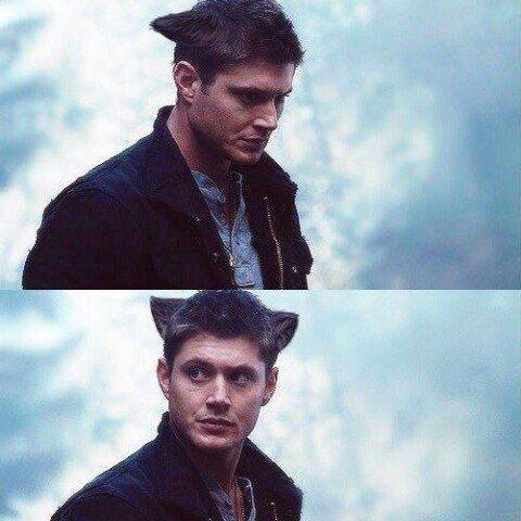 Dean Winchester the cat. :3 #Dean_Winchester #Supernatural