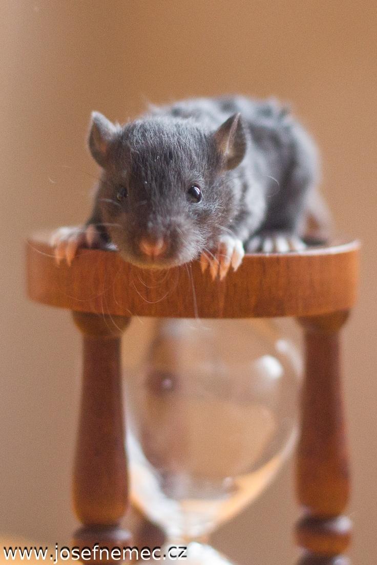 Rats http://kvikal.grovik.net