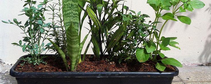 Como montar um vaso em 3 passos 1. Escolhendo as plantas... Não existe uma regra rígida sobre quais são as sete espécies de plantas usadas na montagem deste vaso. A escolha das plantas pode variar dependendo da região do país, mas a versão mais usada é esta:• Arruda (Ruta graveolens)• Comigo-ninguém-pode (Dieffenbachia sp.)• Pimenta (Capsicum annuum)• Espada-de-são-jorge (Sansevieria trifasciata)• Manjericão (Oncimum basilicum)• Alecrim (Rosmarinus officinalis)• Guiné (Petiveria alliacea)…