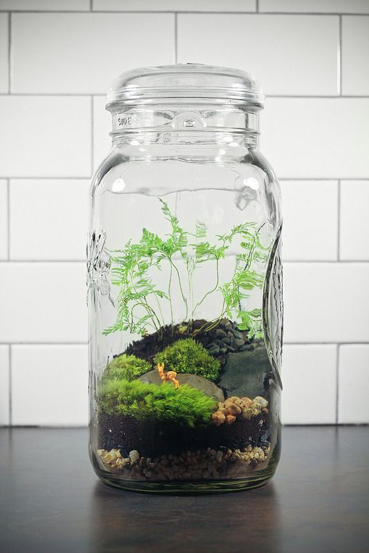 Giant Ball Jar Terrarium It S Over A Gallon And 13 Inches Tall