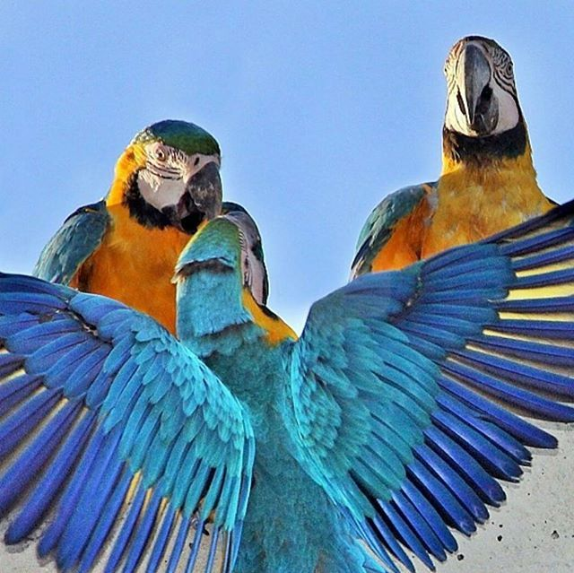 www.mybirdshouse.com is having a SALE on all A&E Bird Cages!  #macaw #macaws #parrot #parrots #parrotsofinstagram #parrotlover #bird #birds #birdstagram #birdsofinstagram #pet #pets #petsofinstagram #animals #avian #animal #animalsofinstagram #paradise #cute #cutest #exotic #happy #happypet #natural #toocute #igcutest #beautiful #beauty #love