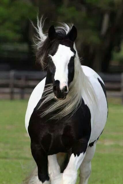 My little sisters always called it a cow horse.