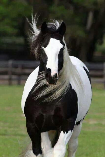 My little sisters always called it a cow horse. Minhas irmãzinhas sempre chamaram essa vaca de cavalo *--*