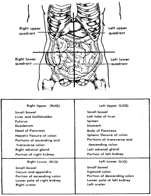 Body quadrants with organs