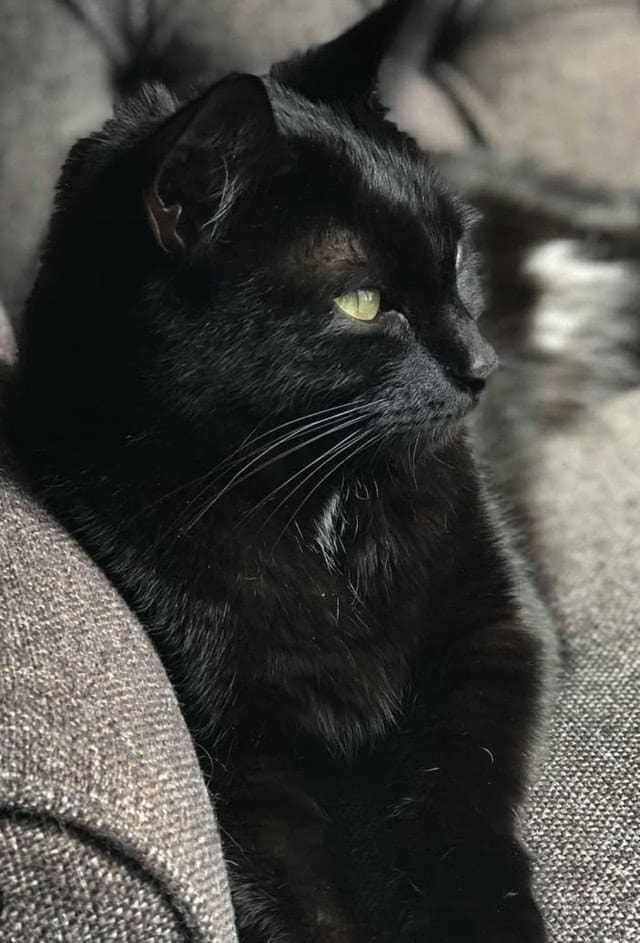 6312cd62e29 17 Beautiful Black Cats With Loads Of Love To Share | CATS KITTENS ...