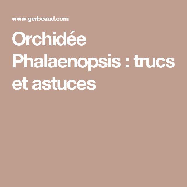 Orchidée Phalaenopsis : trucs et astuces