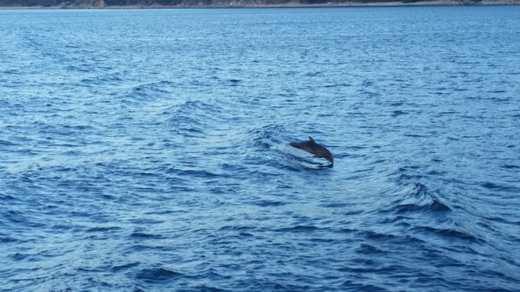 One Dolphin...
