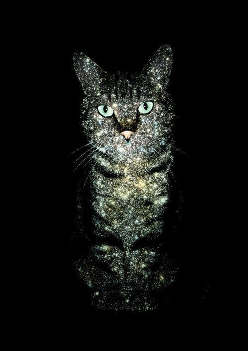 """""""When you're special to a cat, you're special indeed…she brings to you the gift of her preference of you, the sight of you, the sound of your voice, the touch of your hand.""""  ~ Lenore Fleisher"""