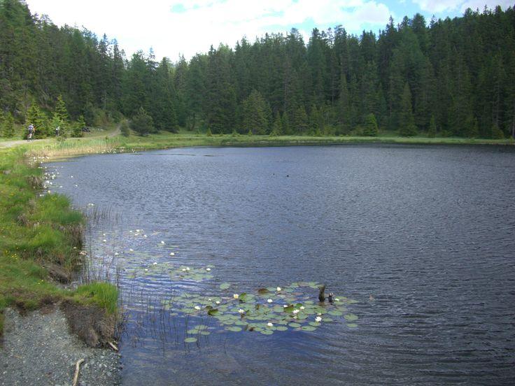 Naturdenkmal Schwarzer See: Mitten im Wald. Gehzeit ca. 1,5 Std. Einfach idyllisch.